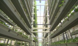 vertical_farm_74765800