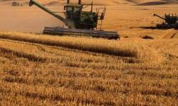 wheat_field_harvesting_1_92061600