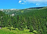 Romania a pierdut Parcul National Retezat. Firma Holzindustrie Schweighofer a cumparat lemn exploatat de firme terte